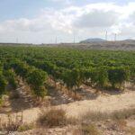 Finca de Uva en produccion
